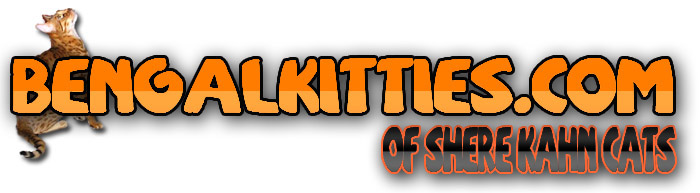 bengal kitties image